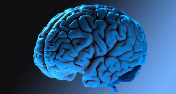 Como Seu Cérebro Funciona?